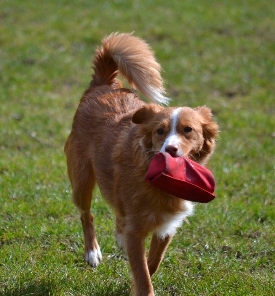 Dein Hund schlingt beim Fressen?