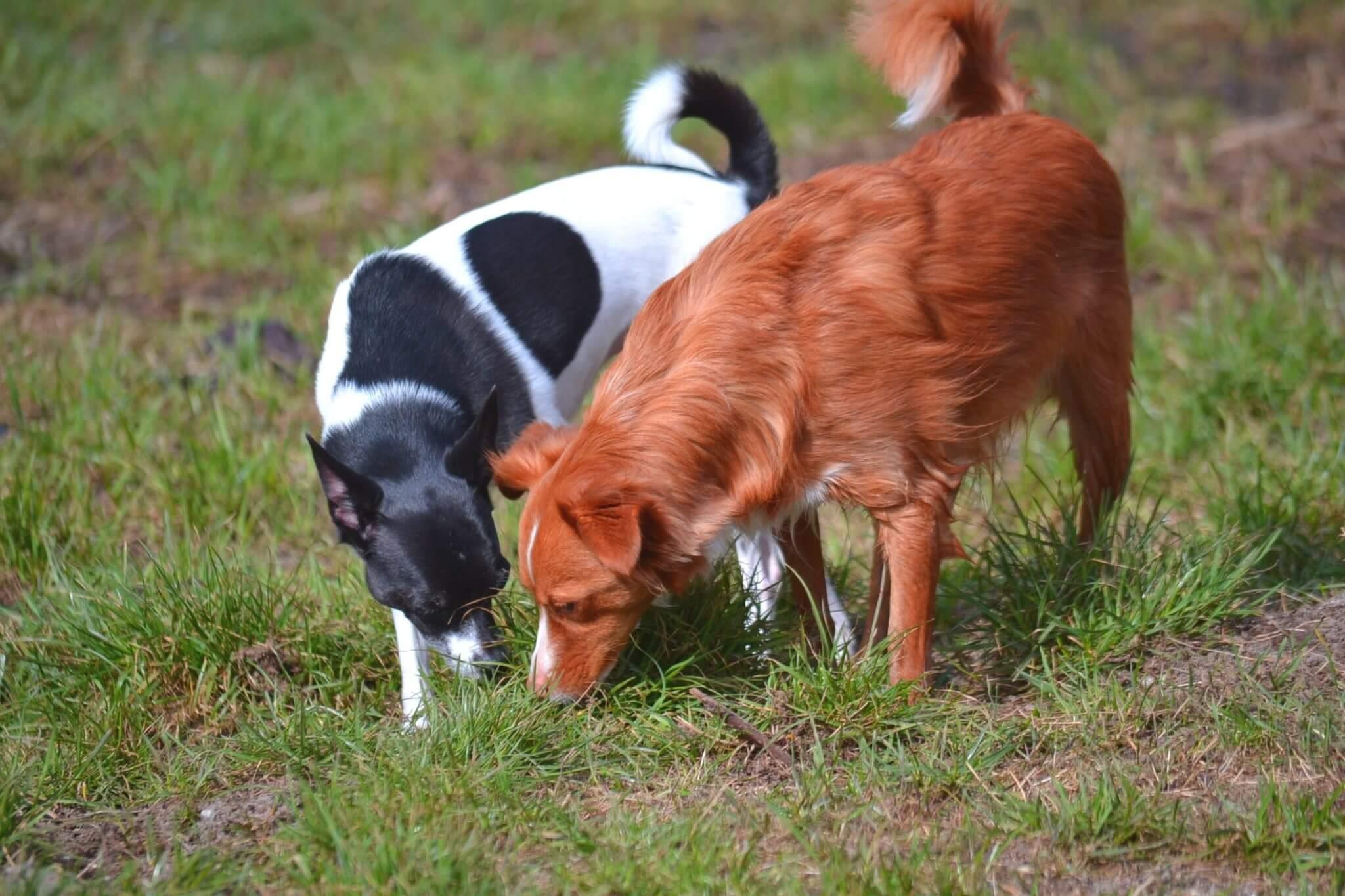 gesunde Hunde - Hundekrankheiten verhindern!