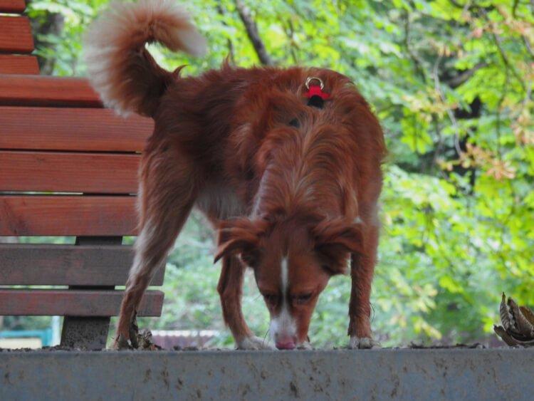 Erbrechen beim Hund - Ursachen und Behandlung 6 Erbrechen beim Hund - Ursachen und Behandlung Erbrechen beim Hund - Ursachen und Behandlung