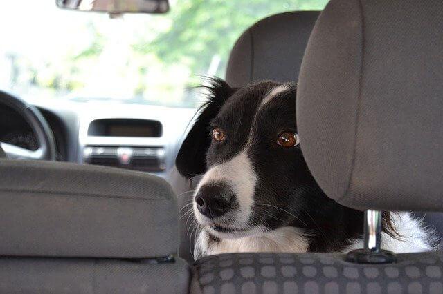 Hundeboxen im Crash-Test