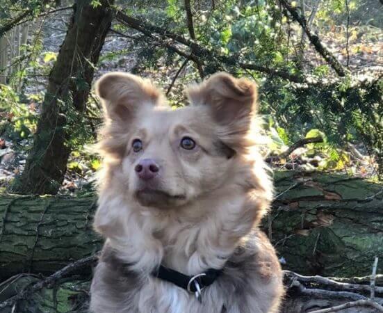 Erkennen sich Hundegeschwister wieder?