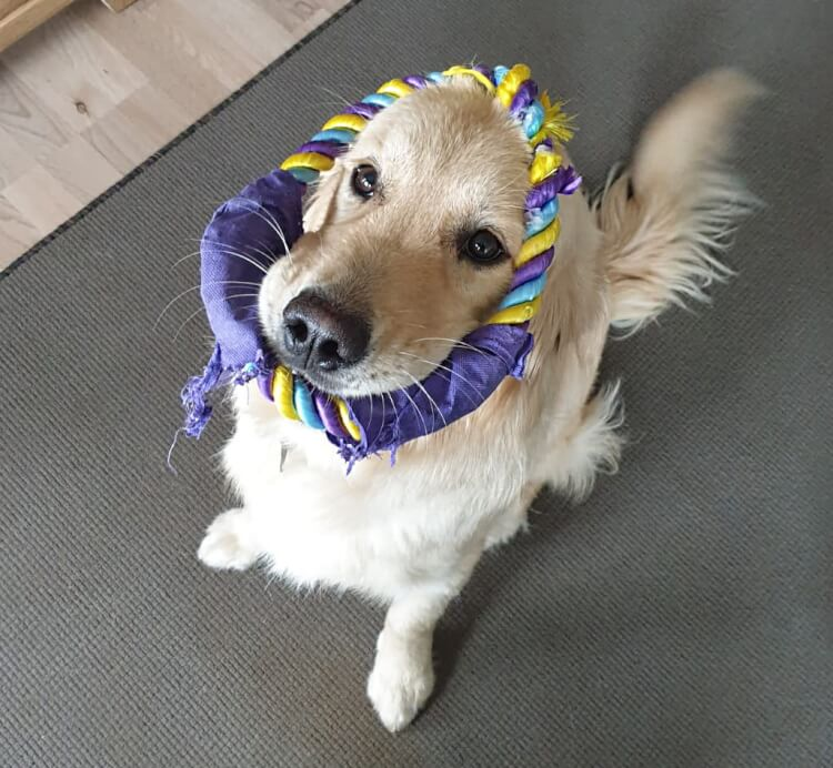 Unser Hundefreund