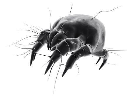 Milben sind Parasiten