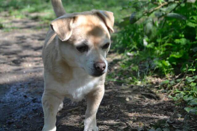 Pantoprazol für Hunde