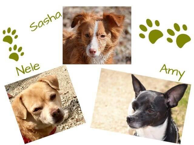 3 Hunde zum hundepfoten-Team