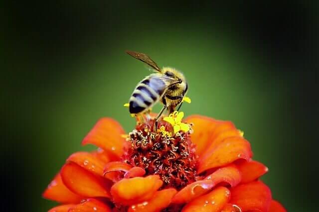 Bienenstich-Allergie