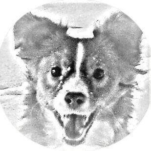 DAS Buch für jeden Hundebesitzer: