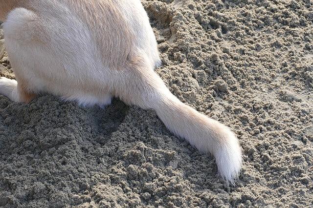 Wedelnde Hunde