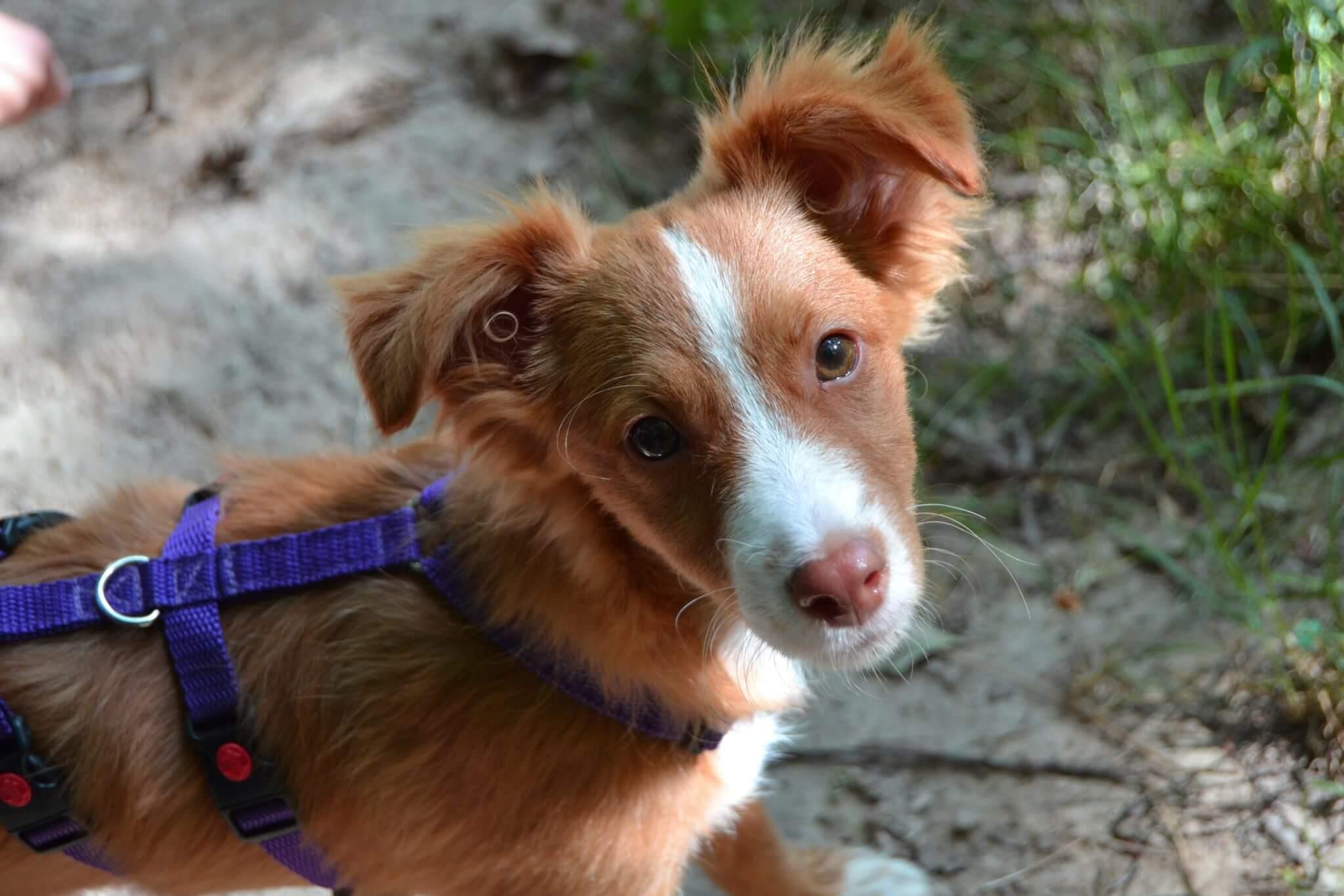 Hundewelpen sind besonders gefährdet