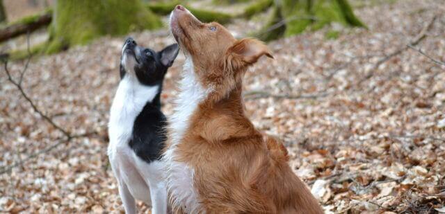 Hausmittel Hunde