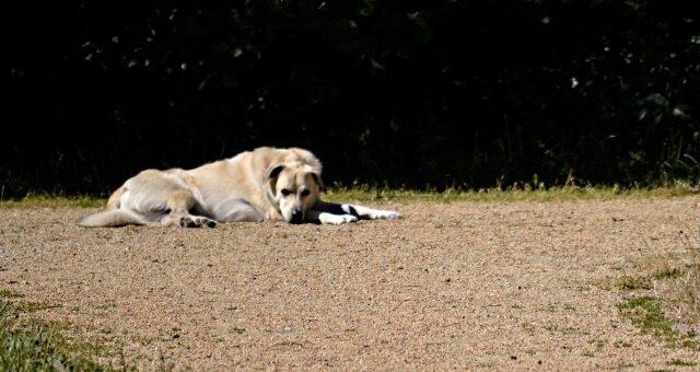 Hitzschlag Überhitzung Hund