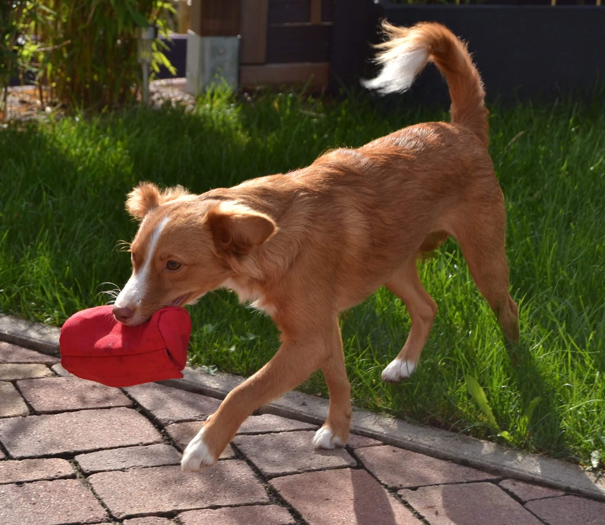Arthrose beim Hund: Ursachen, Symptome und Behandlung