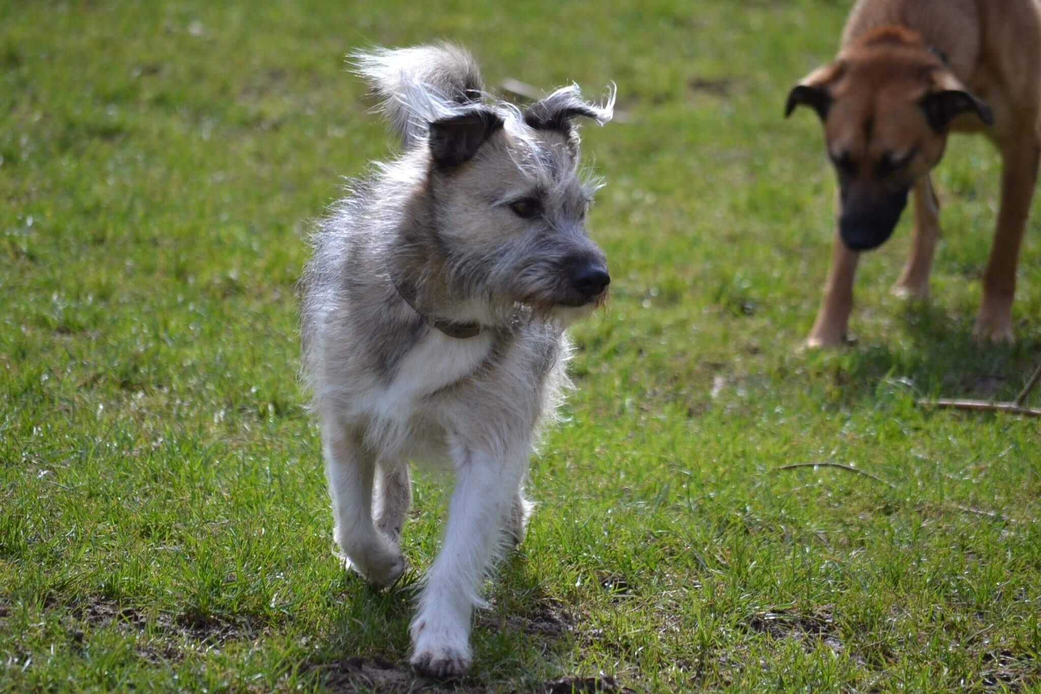 Spirulina für Hunde – Humbug oder Superfood?
